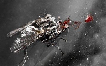 полет, кровь, голова, муха, попадавие