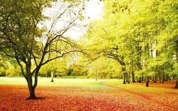 деревья, солнце, лучи, парк, осень, красота, тропинка, листопад, best season