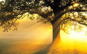 свет, солнце, дерево, лучи, поле, ветви, красота