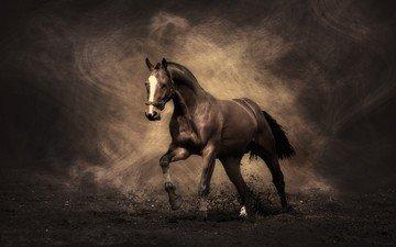 конь, жеребец, мустанг