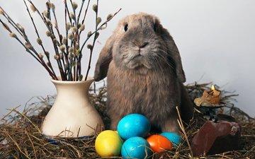 кролик, свеча, пасха, яйца, солома, верба