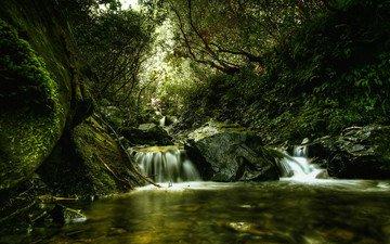 река, зелень, лес, движение