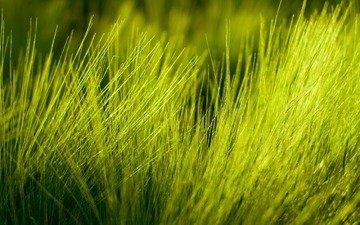 природа, фото, макро трава, high quality wallpapers