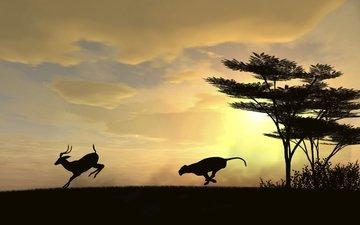 солнце, хищник, погоня, охота, косуля