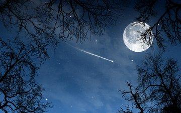 ночь, деревья, природа, пейзаж, звезды, луна, nature wallpapers, месяц, неба, moon, деревь, взляд, luna, ноч, звезд