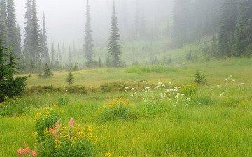 цветы, трава, деревья, природа, зелень, лес, туман, склон, поляна, силуэты, елки, ели