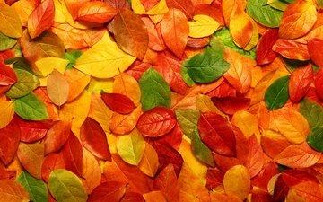 листва, осень