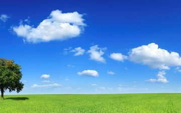 облака, дерево, поле, горизонт