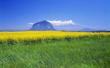желтый, горизонт, полевые цветы, корея, зеленый луг