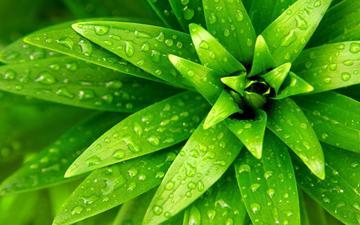 зелень, капли, лист