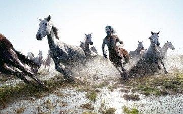 лошади, бег, кентавр