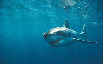 зубы, акула, шрамы