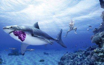 парень, креатив, трусы, юмор, акула