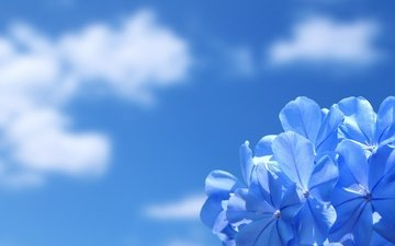 the sky, clouds, nature, wallpaper, flower, beauty
