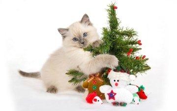 подарки, котенок, игрушки