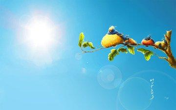 лето, жара, птички
