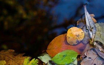 вода, природа, макро фото, листья, лужа