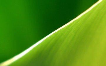 зелёный, полоса, лист, край