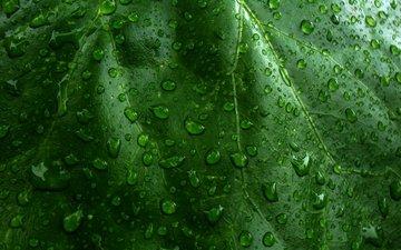 природа, зелёный, макро, капли, лист, капли воды