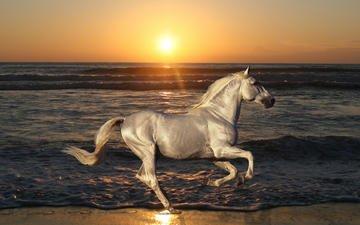 лошадь, море, пляж, конь, жеребец, голоп