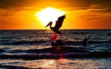вода, обои, пейзаж, море, животные, аист, animals wallpapers, океана, пернатые