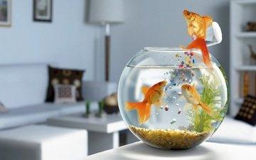 рыбки, аквариум, корм