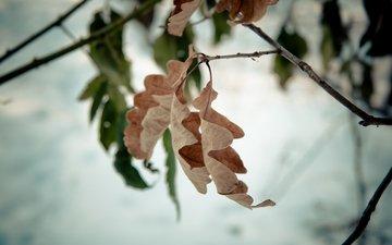 ветка, дерево, лист