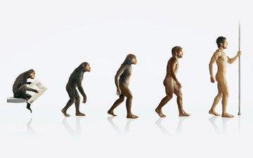 человек, обезьяна, эволюция