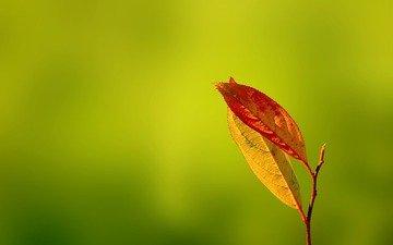 зелень, листья, осень, gentle caress