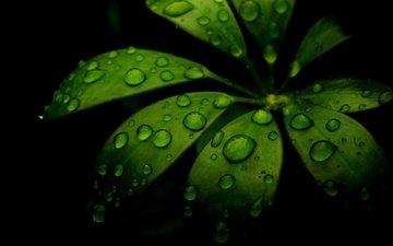 роса, капли, лист, затенение