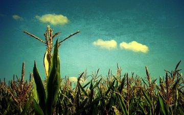 небо, поле, злаки