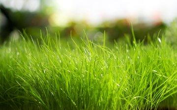 трава, природа, зелёный