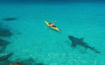 boat, shark, oops