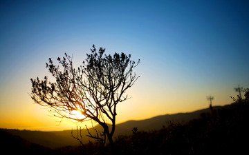 небо, свет, вечер, солнце, природа, закат, фото, кусты, пейзажи, закат солнца, view wallpapers, sundown, bushes, на природе