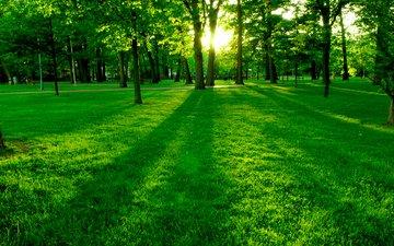 деревья, зелень, поляна