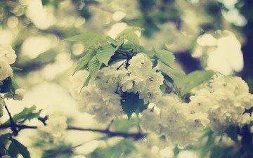 цветы, цветение, листья, ветви, красота, размытость, весна, белые, нежность, боке
