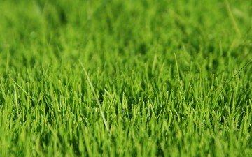 трава, зелёный
