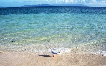 небо, берег, синий, море, горизонт, голубой, чайка, океан, небесный