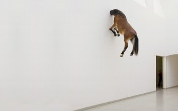 wallpaper, wall, horse