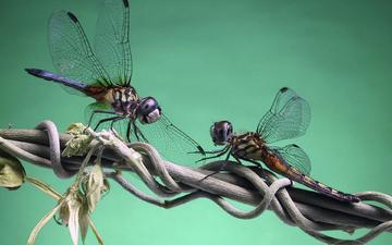 branch, dragonfly, eel