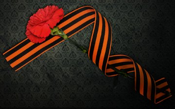 victory day, st. george ribbon, may 9, carnation