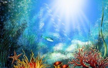 рыбки, дно, кораллы, водоросли