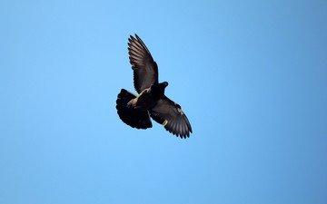 the sky, dove