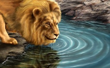картина, хищник, лев, водопой
