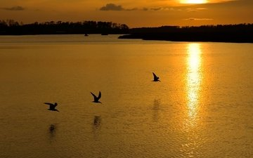 lake, sunset, birds