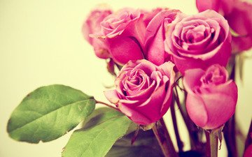 flowers, buds, leaves, macro, roses, petals, bouquet, pink
