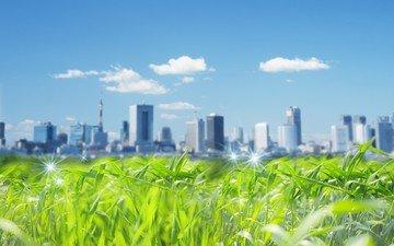 трава, город, небоскребы