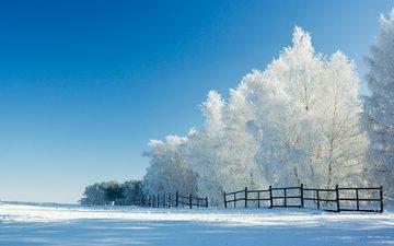 деревья, снег, зима, забор