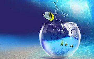 water, fish, aquarium