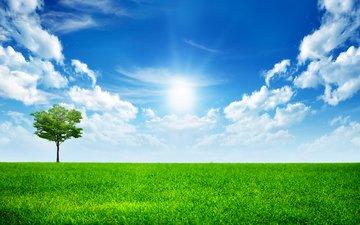 небо, трава, облака, дерево, неба, деревь, ландшафт, all alone in this world, грин, на солнце